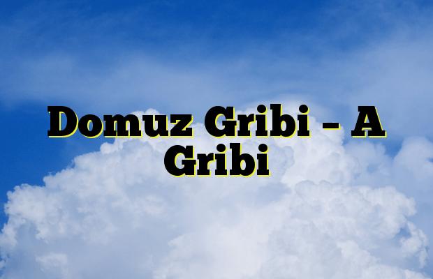 Domuz Gribi – A Gribi